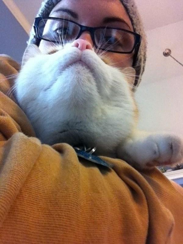 cat-beards-17