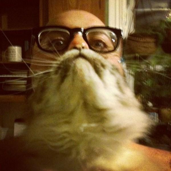 cat-beards-18