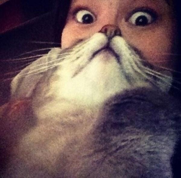 cat-beards-23