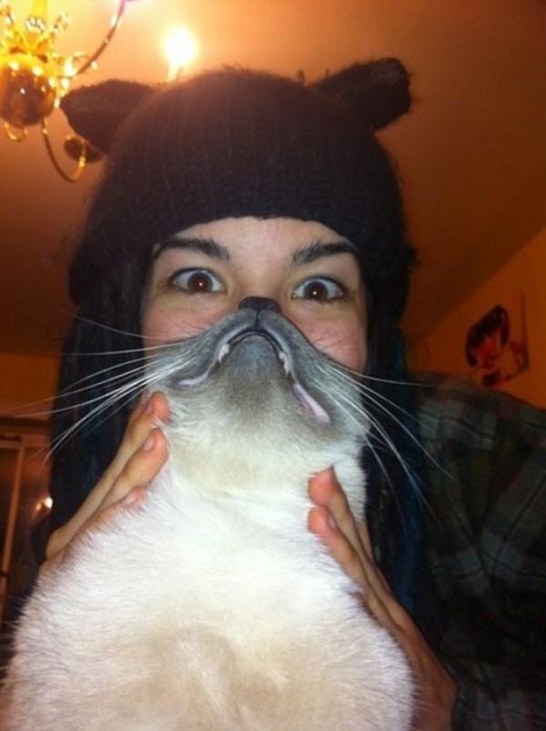 cat-beards-4