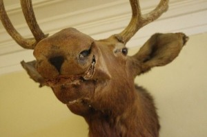 Scary Taxidermied Animals (40 photos) 1