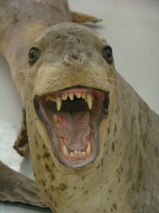 Scary Taxidermied Animals (40 photos) 2