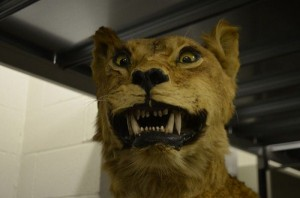 Scary Taxidermied Animals (40 photos) 3