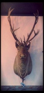 Scary Taxidermied Animals (40 photos) 5
