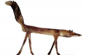 Scary Taxidermied Animals (40 photos) 7