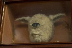 Scary Taxidermied Animals (40 photos) 11