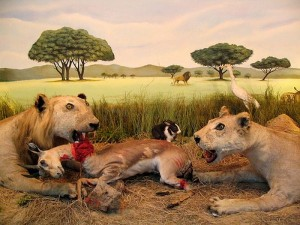 Scary Taxidermied Animals (40 photos) 15