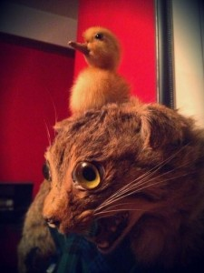 Scary Taxidermied Animals (40 photos) 18