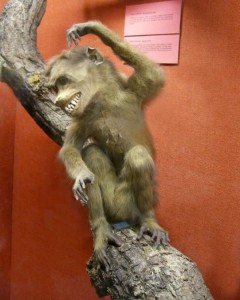 Scary Taxidermied Animals (40 photos) 20