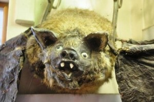 Scary Taxidermied Animals (40 photos) 22