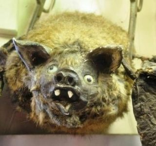 Scary Taxidermied Animals (40 photos)