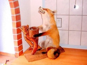 Scary Taxidermied Animals (40 photos) 24