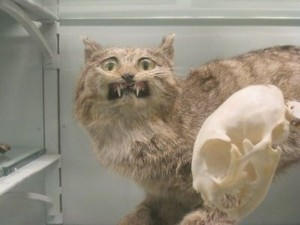 Scary Taxidermied Animals (40 photos) 25