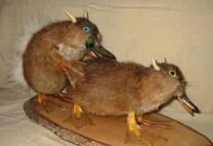 Scary Taxidermied Animals (40 photos) 27