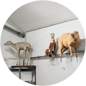 Scary Taxidermied Animals (40 photos) 28