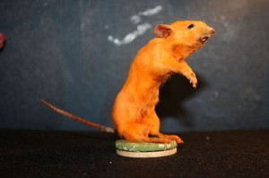 Scary Taxidermied Animals (40 photos) 29