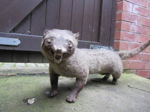 Scary Taxidermied Animals (40 photos) 30