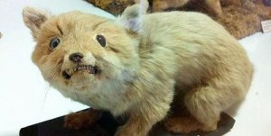 Scary Taxidermied Animals (40 photos) 33