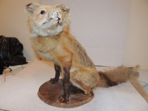 Scary Taxidermied Animals (40 photos) 36