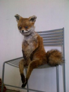 Scary Taxidermied Animals (40 photos) 37