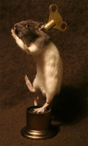 Scary Taxidermied Animals (40 photos) 40