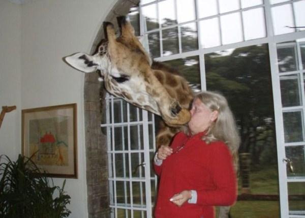 women vs animals 17 Women vs Animals (35 photos)