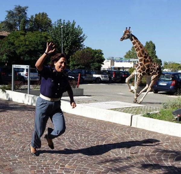 women vs animals 2 Women vs Animals (35 photos)