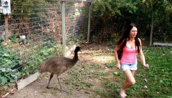 women vs animals 25 Women vs Animals (35 photos)