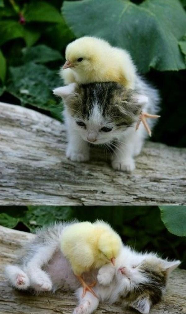 104 Απίθανο φιλίες των Ζώων (30 φωτογραφίες)