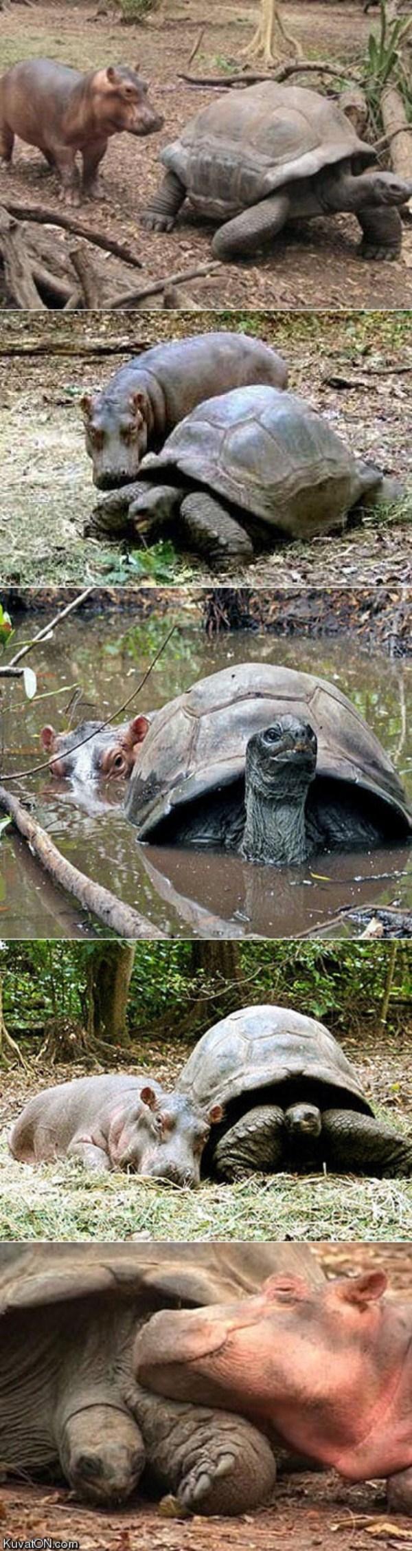 116 Απίθανο φιλίες των Ζώων (30 φωτογραφίες)