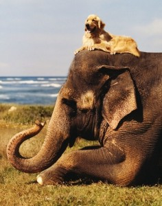 Unlikely Animal Friendships (30 photos) 12