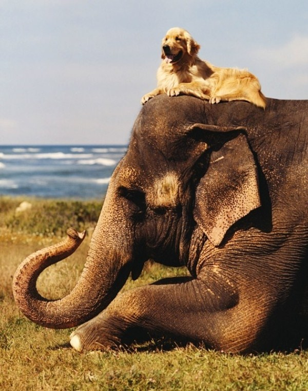 124 Απίθανο φιλίες των Ζώων (30 φωτογραφίες)
