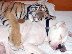 Unlikely Animal Friendships (30 photos) 13