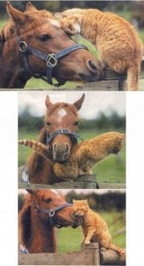 Unlikely Animal Friendships (30 photos) 15