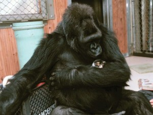Unlikely Animal Friendships (30 photos) 19