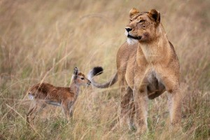 Unlikely Animal Friendships (30 photos) 21
