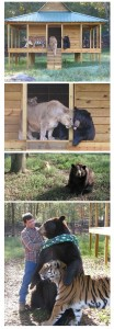 Unlikely Animal Friendships (30 photos) 22