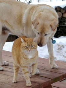 Unlikely Animal Friendships (30 photos) 26