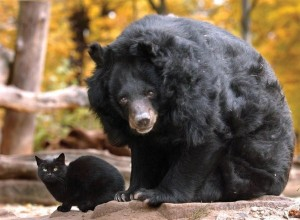 Unlikely Animal Friendships (30 photos) 27