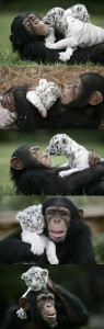 Unlikely Animal Friendships (30 photos) 29