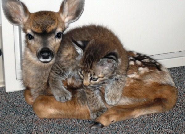 46 Απίθανο φιλίες των Ζώων (30 φωτογραφίες)