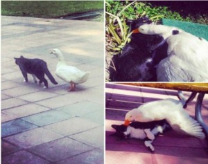 Unlikely Animal Friendships (30 photos) 5
