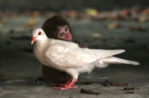 Unlikely Animal Friendships (30 photos) 6