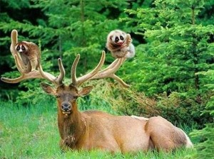 Unlikely Animal Friendships (30 photos) 7