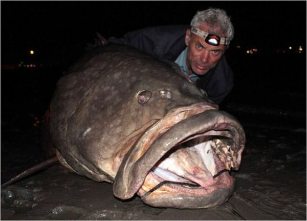 a_few_fishermens_biggest_catches_ever_640_26