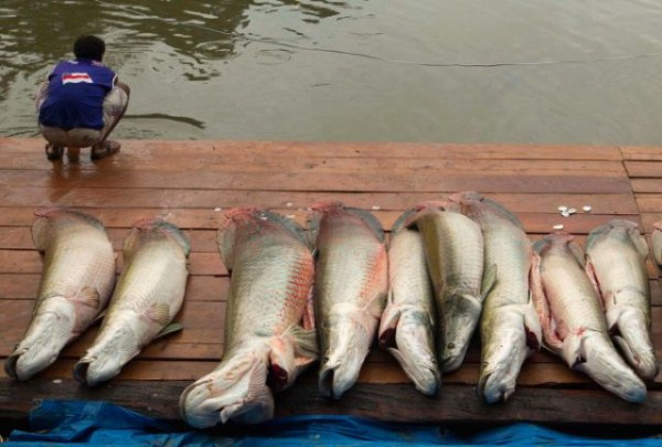 a_few_fishermens_biggest_catches_ever_640_30