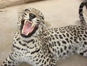 Animal Dentist (19 photos) 8