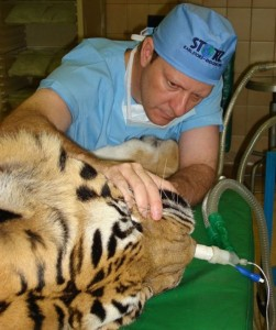 Animal Dentist (19 photos) 13