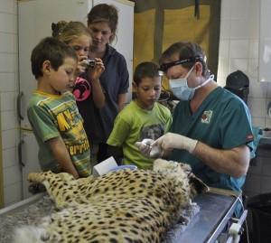 Animal Dentist (19 photos) 14