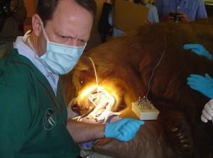 Animal Dentist (19 photos) 17